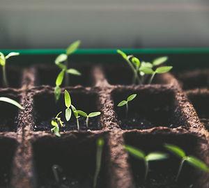 seedlings by markus spiske on unsplash.j