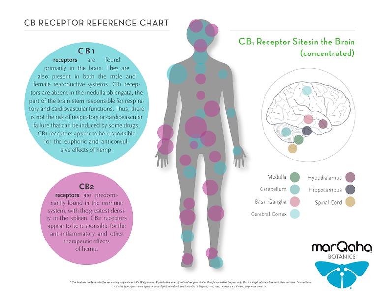 marQaha-Botanics-CB-Receptors-Infographi