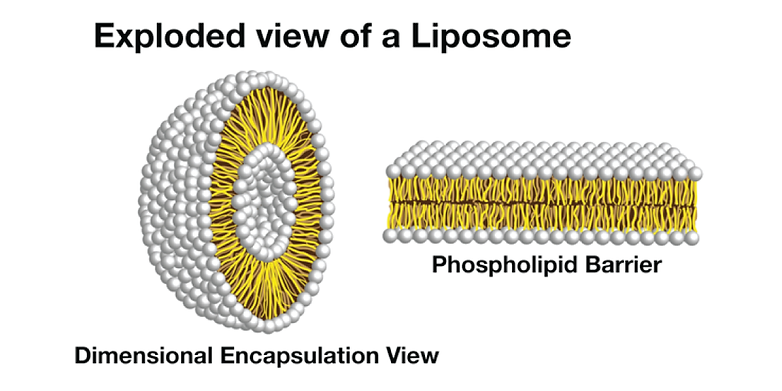 plantrica-Exploded-View-of-a-Lipsome.png