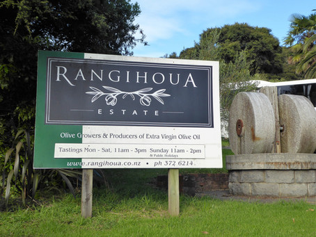 Behind the scenes for olive harvesting at award winning Rangihoua