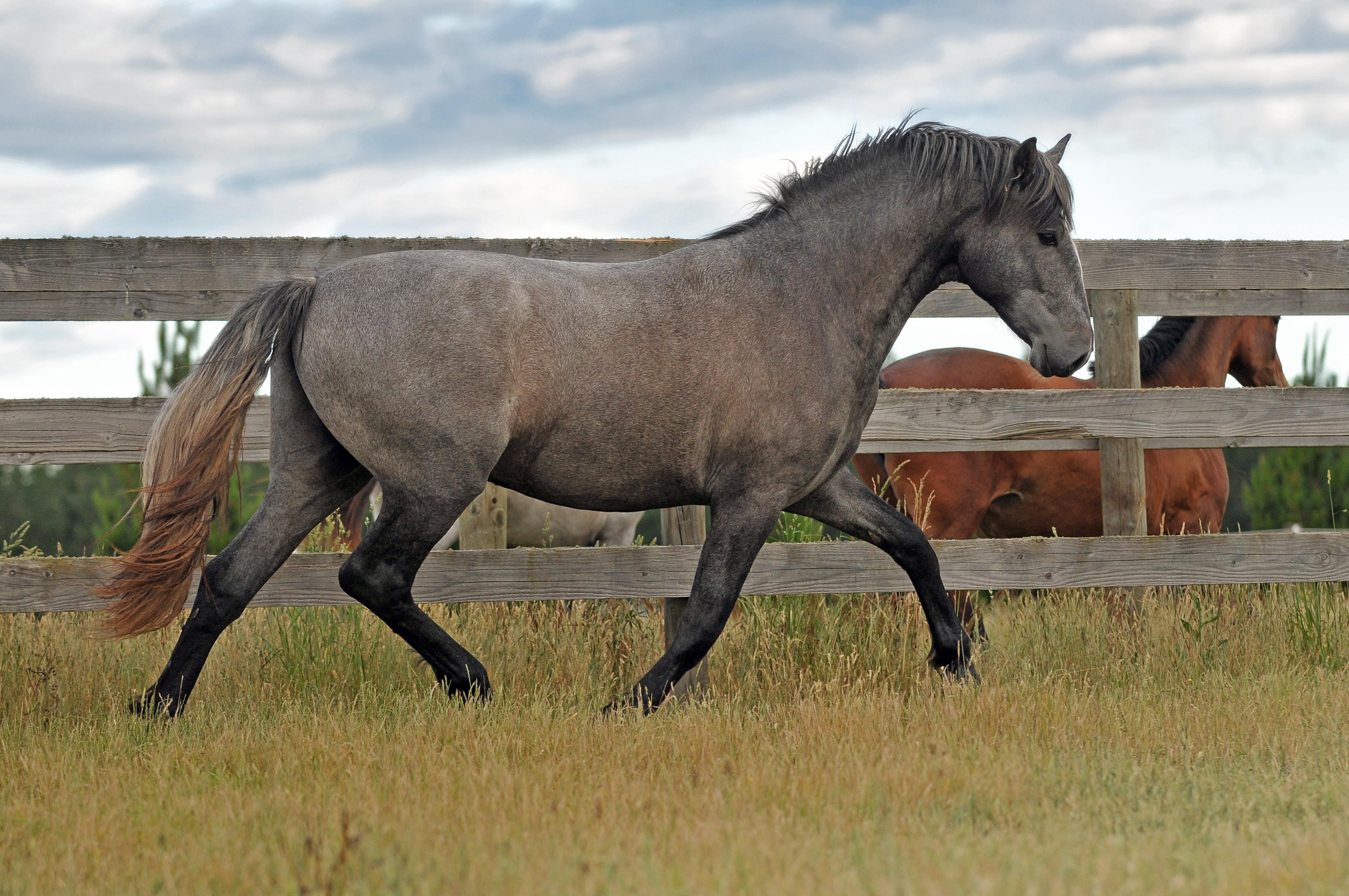 Hanna Alejandro, 2 year old colt