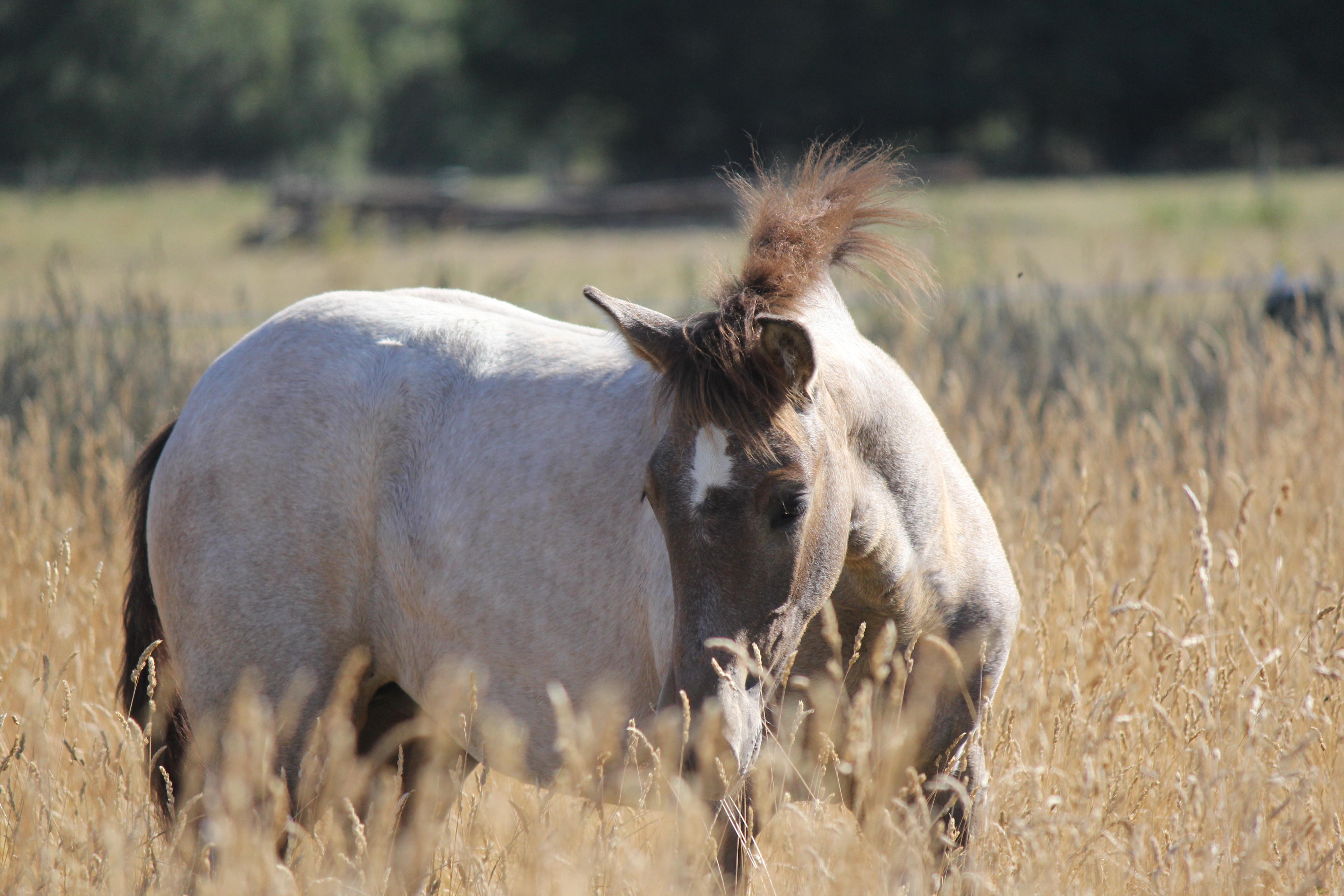 Hanna Carina, filly foal