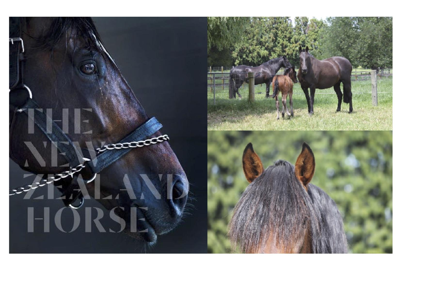 NZ Horse Book