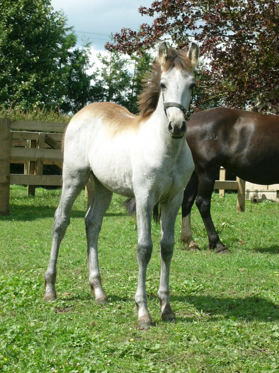 Berwick Adora, 2nd cross foal