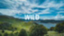 into the wild MATESE sito.jpg