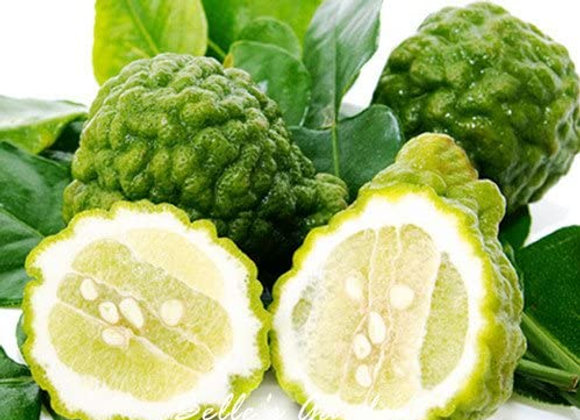 Kaffir lime, 500g - Indonesien