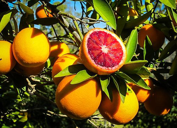 Blodappelsiner Moro, Økologisk 3,5 kg - Italien