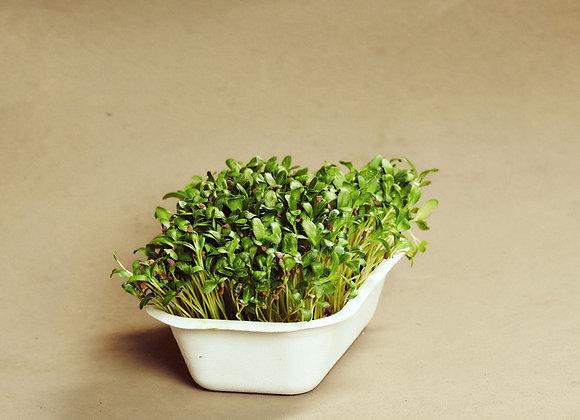 Bukkehorn - Mikrogrønt