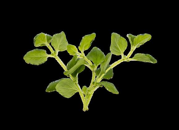 Oregano i pose (afklip) - Økologiske krydderurter