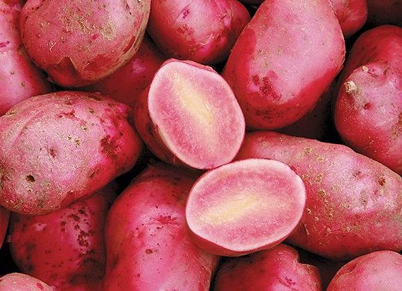 Røde kartofler, Økologiske - Holland ca. 2,5 kilo 🌳