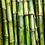 Thumbnail: Sugarcanes , Costa Rica - 1kg