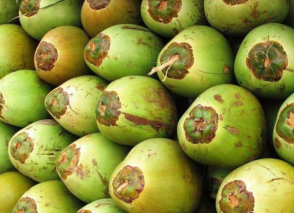 Grøn Kokosnød, ikke sprøjtet - Uganda🌴