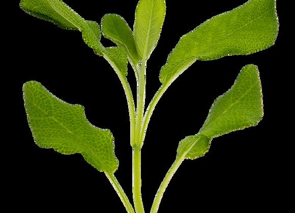 Salvie i pose (afklip) - Økologiske krydderurter
