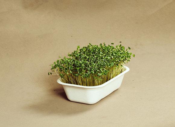Broccoli - Mikrogrønt