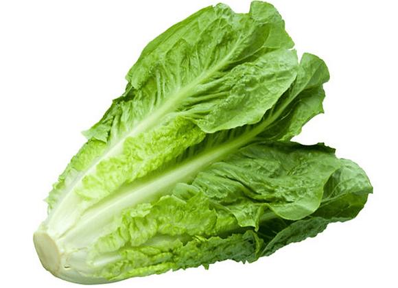 Romaine salat økologisk, 1 stk - Danmark