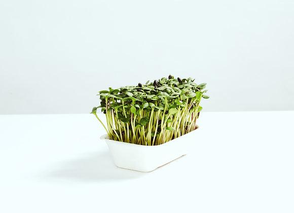Solsikke - Mikrogrønt