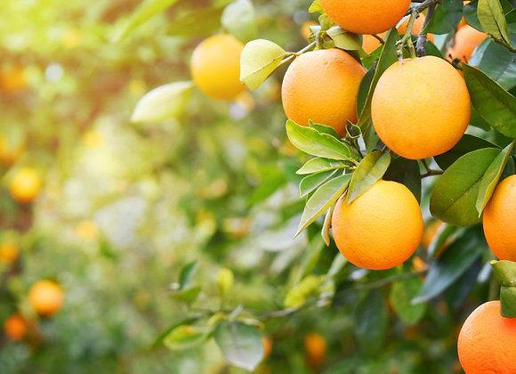 Appelsiner, Økologisk 5 kg