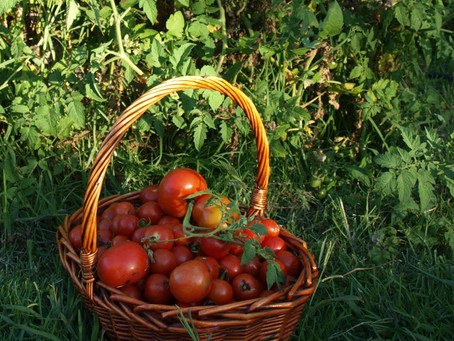Vegetable Gardening to-do's for Summer