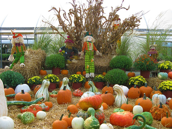 Pumpkins & Cornstalks
