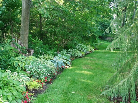 Great Border Plants