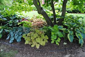 Tidbits about Perennials and Annuals