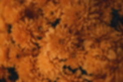 pexels-ave-calvar-martinez-3208063.jpg