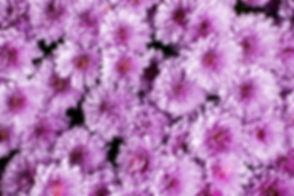 pexels-nikolett-emmert-2898430.jpg