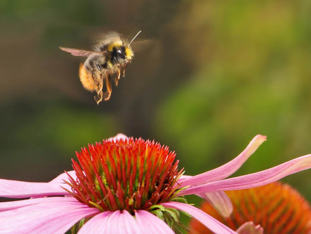 All About Bees with Diane Berk