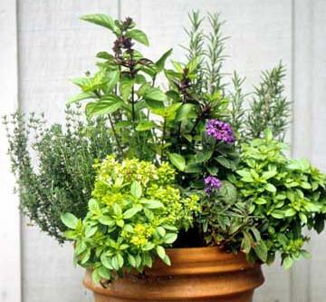 Kitchen Garden Containers