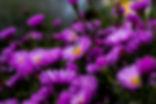 pexels-photo-606505.jpeg