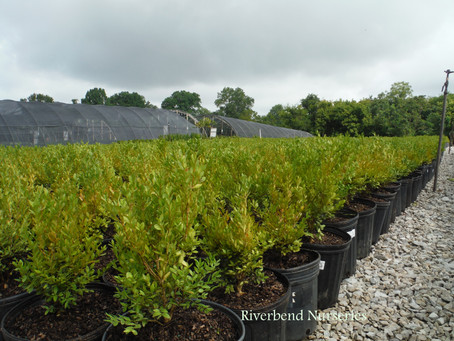 Pruning Tips for Shrubs and Small Trees this Fall