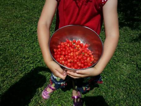 Cherry Pickin'