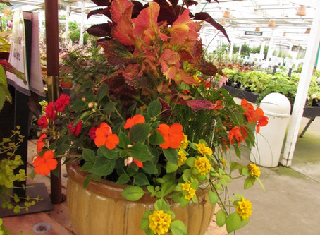 How-to Create Container Gardening Pots