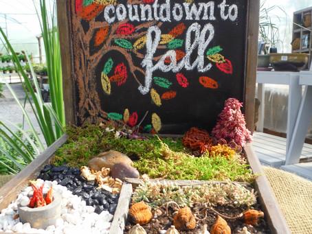 Miniature & Fairy Garden Seasonal Workshop