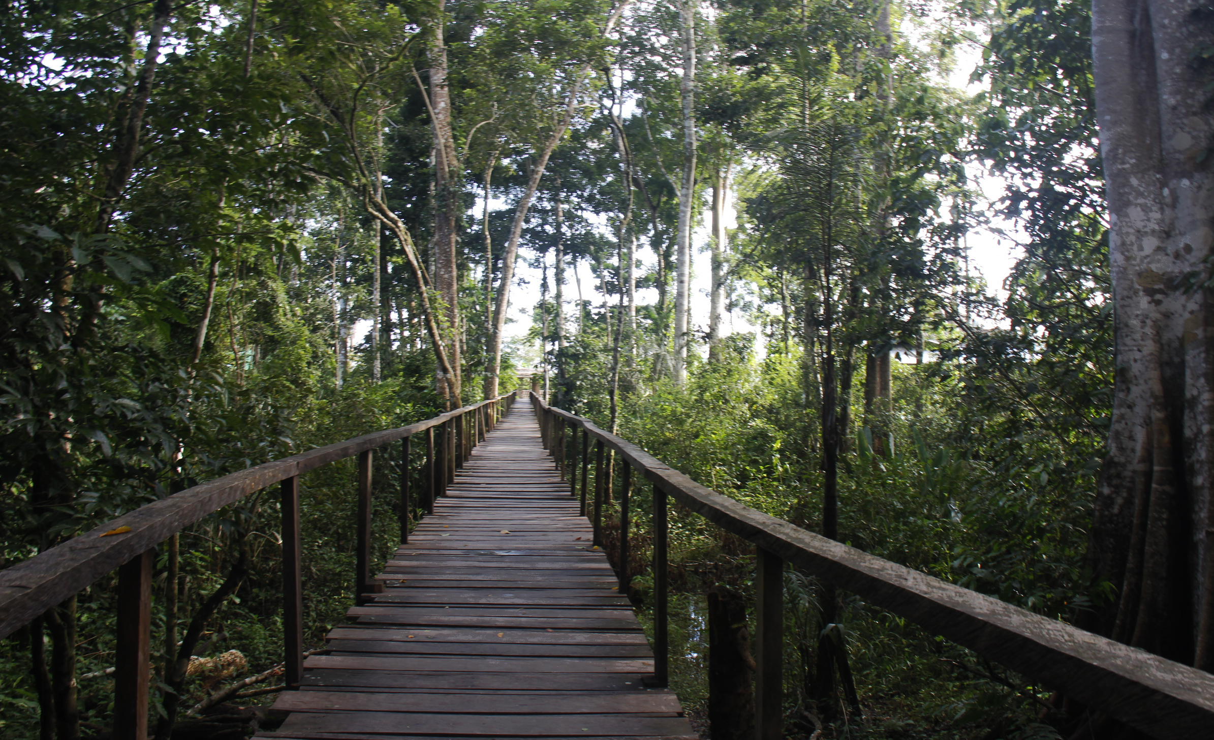 Path through the amazon jungle