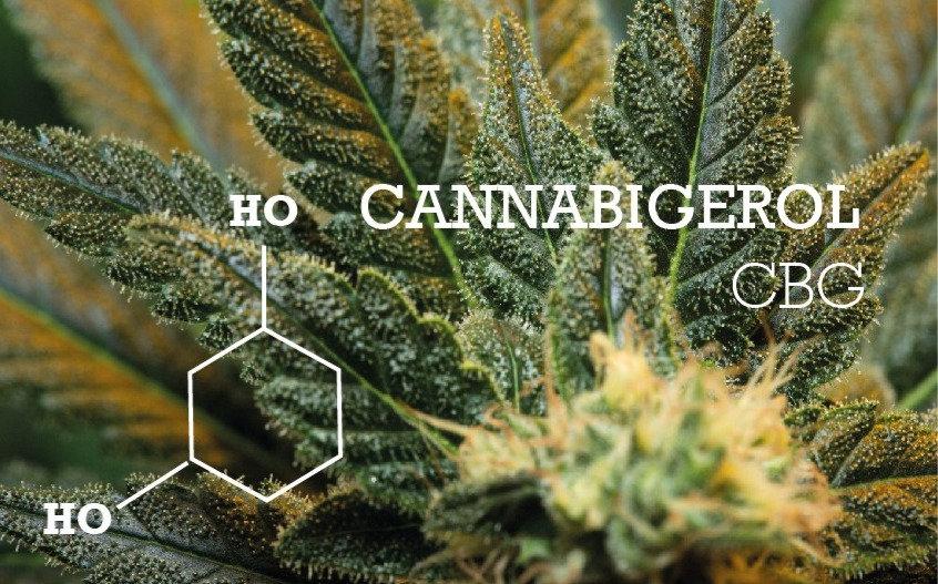 Cannabigerol CBG_.jpg