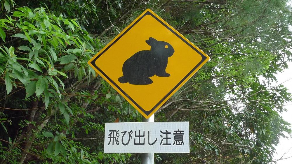 【奄美大島】奄美群島に生息する希少野生動物を知ろう!絶滅危惧種を守るために私たちができること