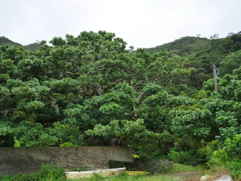 加計呂麻島を探索『カケロマドットコム』のエコツアーガイドで記憶に残るオンリーワンの旅を!