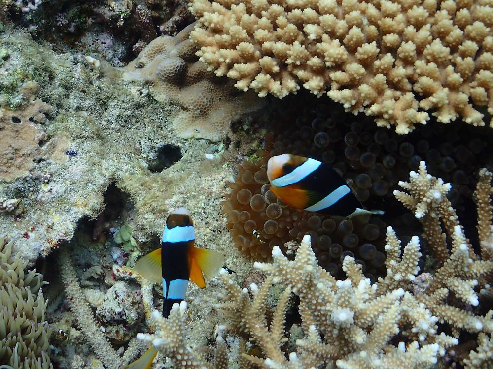 奄美大島・加計呂麻島のアクティビティ『ダンデライオン奄美』のシュノーケリング サンゴ礁の森