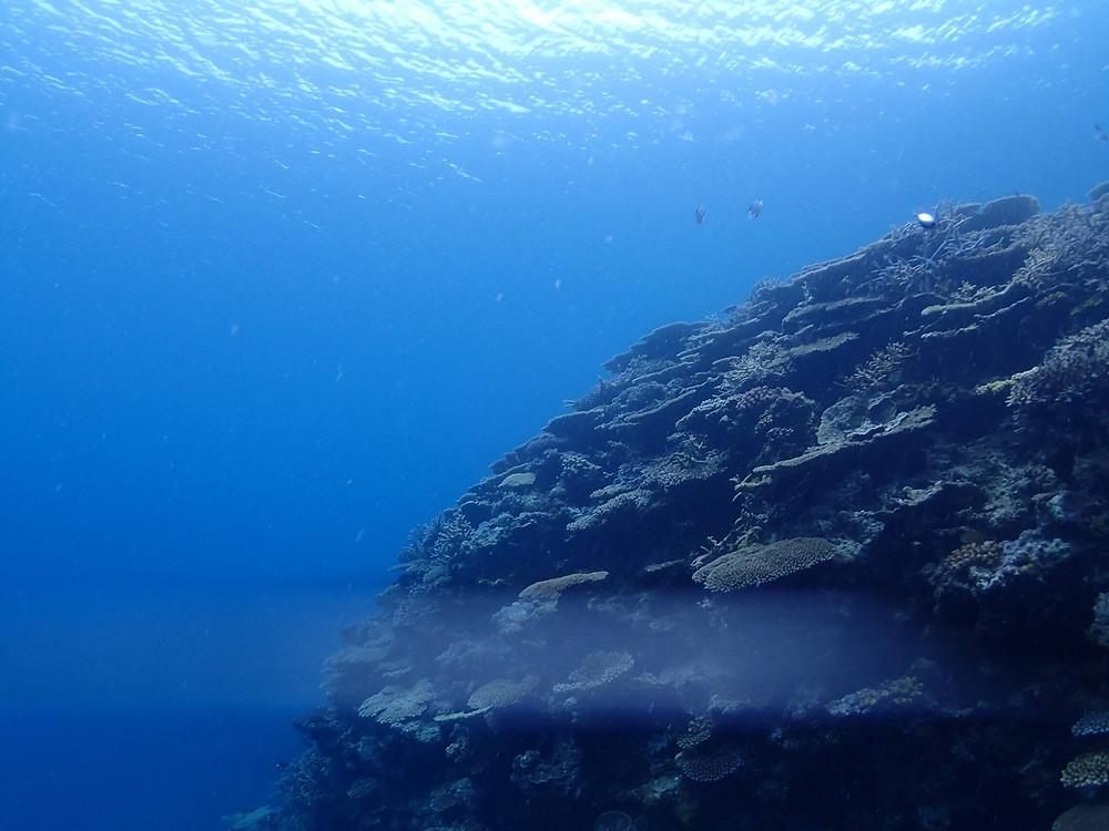 奄美大島 加計呂麻島の海