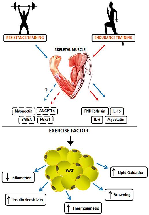 zdrava prehrana za mišice