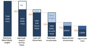 meritve telesne sestave
