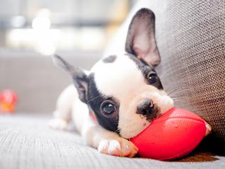 5 Ventajas de tener mascotas
