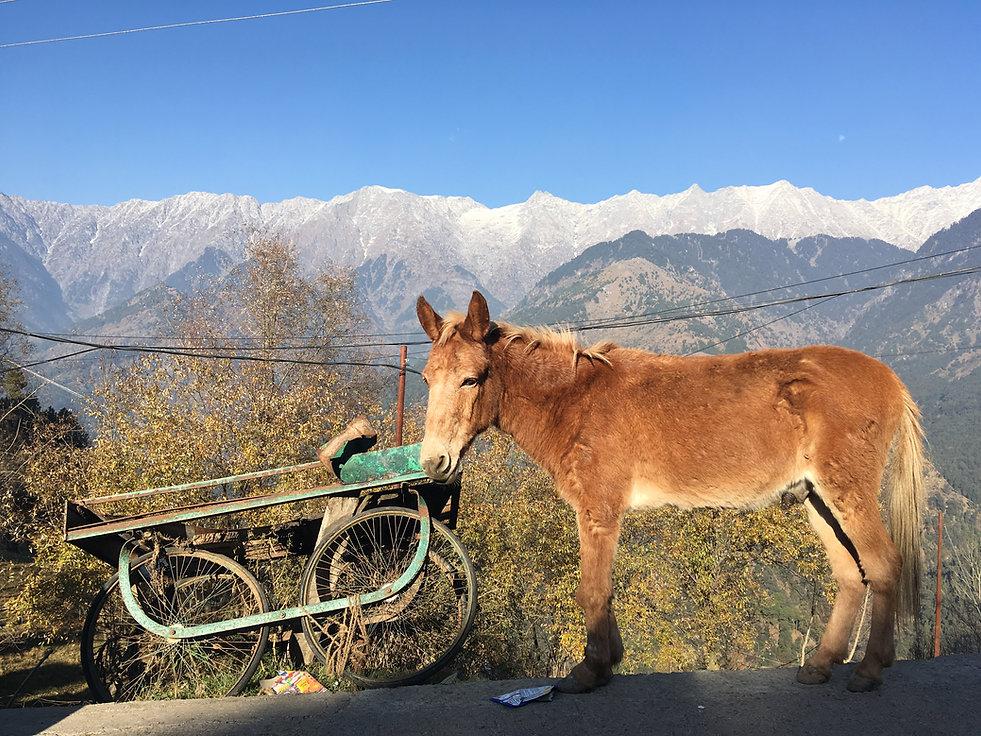 mountain horse.JPG