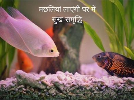Astrology में जाने की केसे मछलियां लाएंगी घर में सुख-समृद्धि