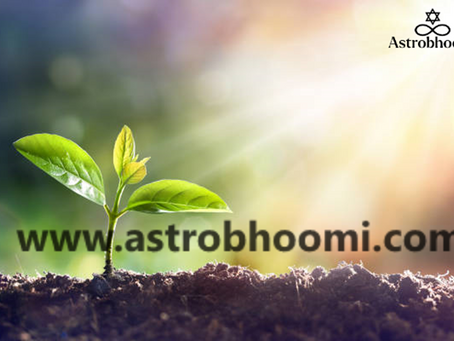 Vastu Tips: Keep these 4 plants in your home for happiness and wealth