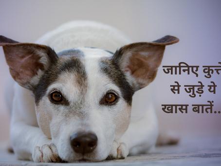 आप नहीं जानते होंगे कुत्ते से जुड़े ये 8 शकुन-अपशकुन, जानिए खास बातें...