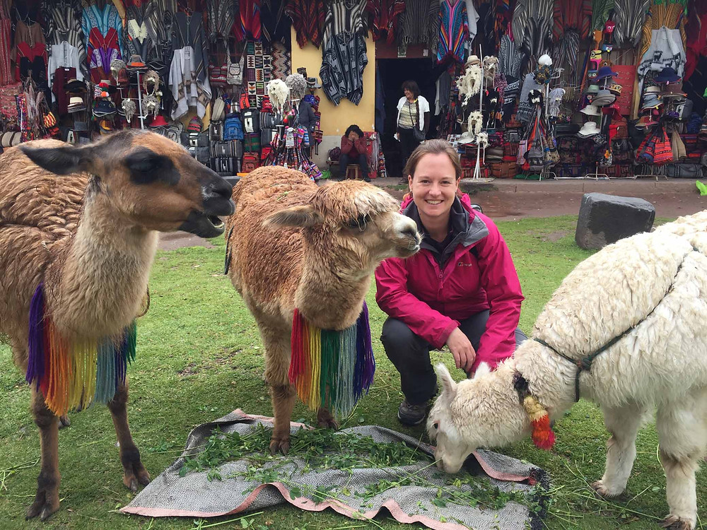 Picture time with Llama's and Alpaca - Picture by Kelvin Prevett