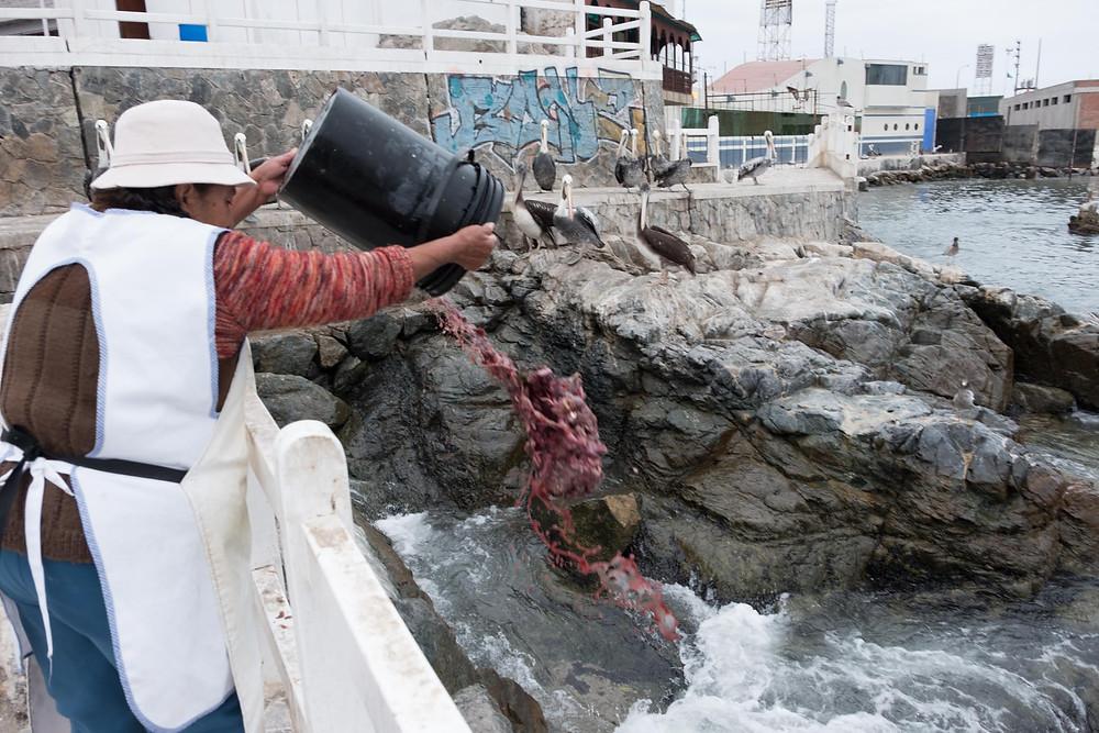 Mmmm, fish innards, Ilo, Peru - AvVida.co.uk