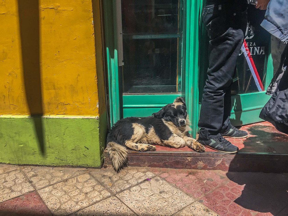 Sleeping dog in Bolivia - AvVida.co.uk